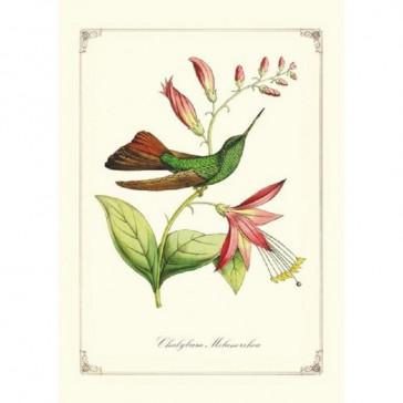 Carnet illustré de colibris par Gwenaëlle Trolez