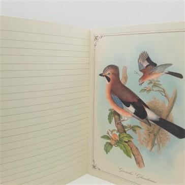 """Illustration du carnet """"Histoire naturelle des oiseaux par Gwenaëlle Trolez"""