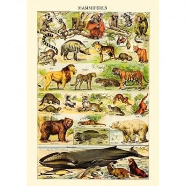 Cahier illustré de planches présentant les espèces animales par Gwenaëlle Trolez