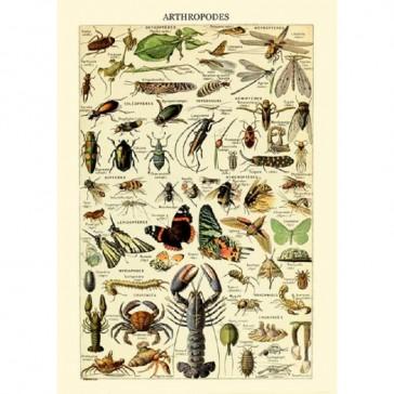 Cahier pour découvrir les espèces animales par Gwenaëlle Trolez